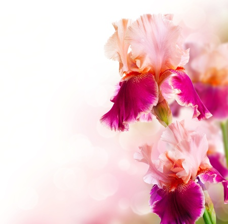 Iris Flowers Art Design Belle Fleur Banque d'images