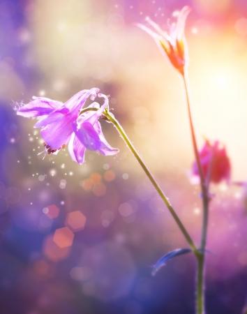 Flowers  Floral Abstract Purple Design  Soft Focus Stock fotó