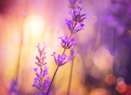 Flowers  Floral Abstract Purple Design  Soft Focus Stock Photo