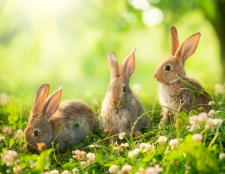 Rabbits  Art Design of Cute Little Easter Bunnies in the Meadow  photo