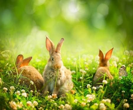 Rabbits  Art Design of Cute Little Easter Bunnies in the Meadow Фото со стока - 20934477