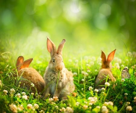 Rabbits Art Design von Cute Little Osterhasen auf der Wiese Standard-Bild - 20934477