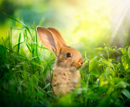 Rabbit  Art Design of Cute Little Easter Bunny in the Meadow photo