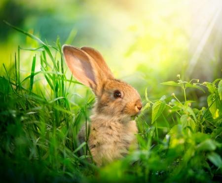 conejo: Rabbit Design Art de lindo conejito Pascua en el Prado Foto de archivo