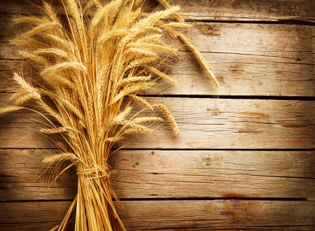 harvest: Wheat Ears on the Wooden Table  Harvest concept  Stock Photo