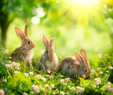 Rabbits  Art Design of Cute Little Easter Bunnies in the Meadow Reklamní fotografie - 20934485