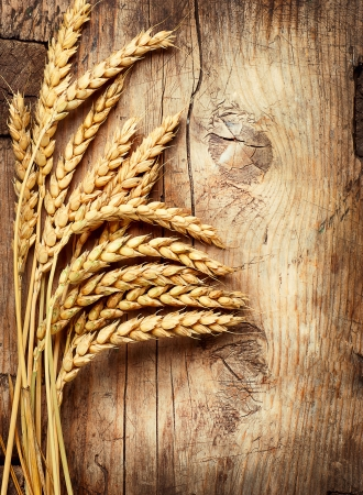 Wheat Harvest: Wheat Ears on the Wood  Wooden Background