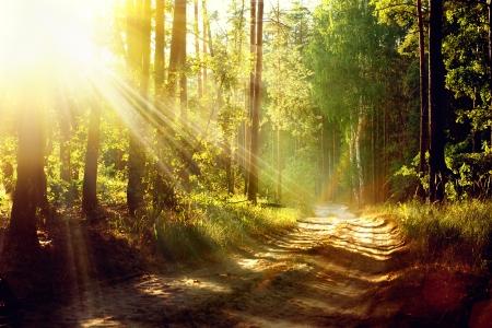 太陽の光、影および霧で美しいシーン ミスティ オールド フォレスト