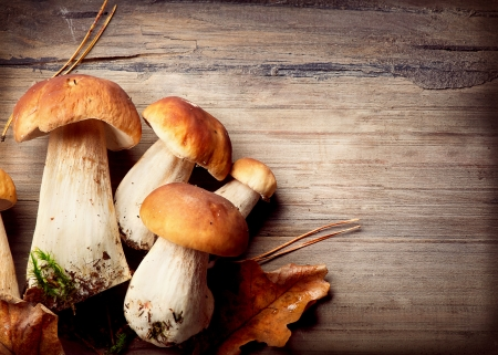 Mushroom Boletus over Wooden Background  Autumn Cep Mushrooms