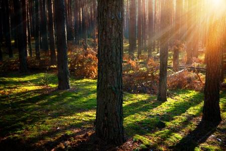 forrest: Misty Old Forest Hout van de herfst Stockfoto