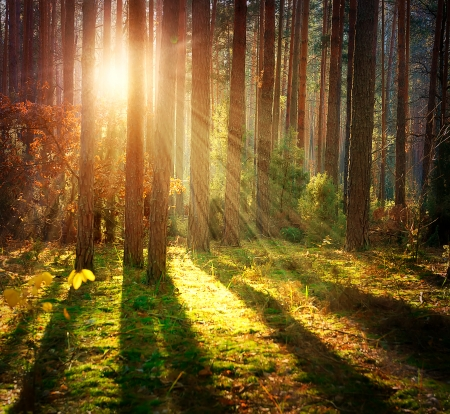 Misty Alten Wald Autumn Woods Standard-Bild - 23736097