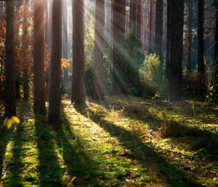 안개 낀 오래된 숲 가을 숲 스톡 콘텐츠