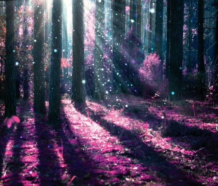 táj: Fantasy táj titokzatos öreg erdő Stock fotó