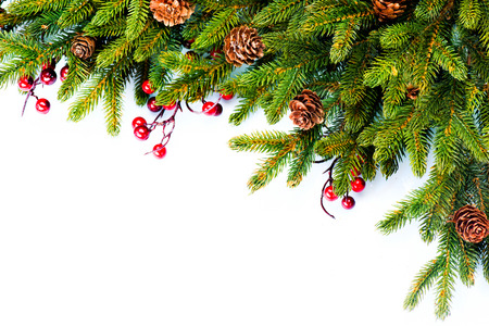 Christmas  Evergreen Fir tree Border Design Stock Photo - 23536724