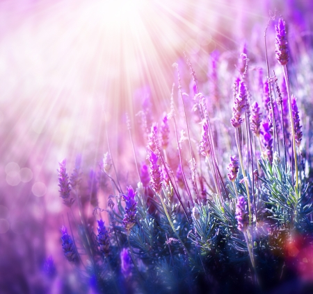 abstract flowers: Lavender