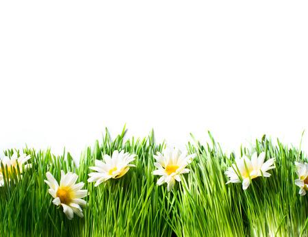 Primavera prado con hierba y flores margaritas Foto de archivo