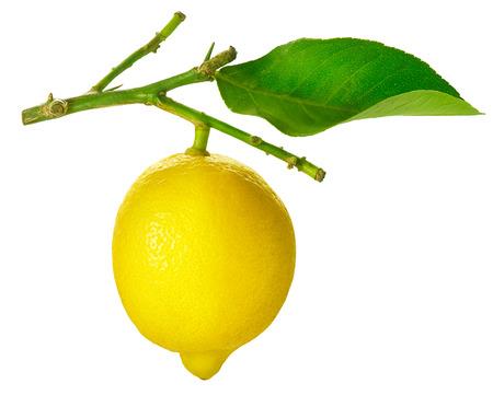 Lemon isolated on a White background photo