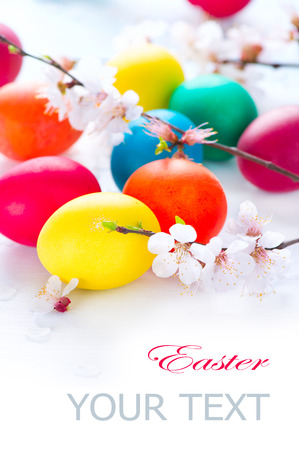 Easter  Colorful easter eggs with spring blossom flowers photo