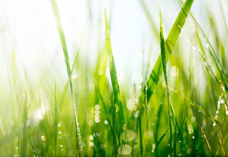 drop: Hierba verde fresca con gotas de rocío de enfoque suave de cerca