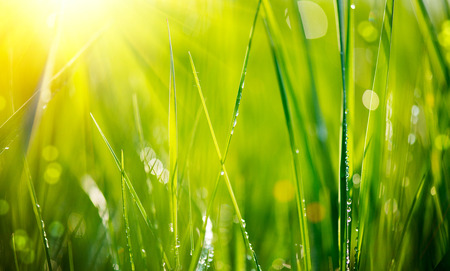 buena salud: Hierba verde fresca con gotas de rocío de enfoque suave de cerca