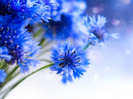 Cornflowers  Wild Blue Flowers Blooming  Border Art Design Imagens