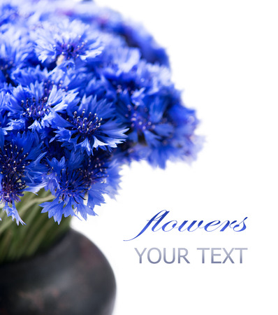 Cornflowers  Wild blue flowers bunch isolated on white photo