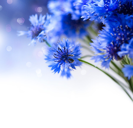 Cornflowers  Wild Blue Flowers Blooming  Border Art Design photo