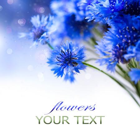 garden cornflowers: Cornflowers  Wild Blue Flowers Blooming  Border Art Design Stock Photo
