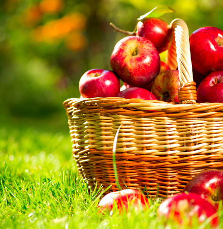 Organic Apples in a Basket Outdoor photo