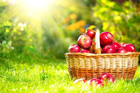 바구니 야외 과수원 가을 정원에서 유기농 사과