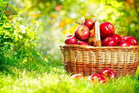 Manzanas orgánicas en una cesta al aire libre