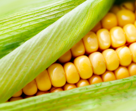 Sweet corn closeup  Fresh organic corn cob photo