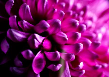 Dahlia autumn flower petals closeup Imagens - 30138214