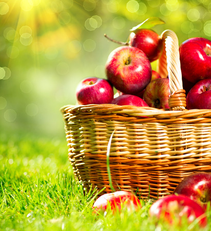 Biologische appels in een mand buiten Boomgaard Stockfoto