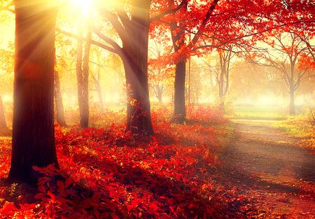 estaciones del año: Escena hermosa del bosque brumoso viejo otoño