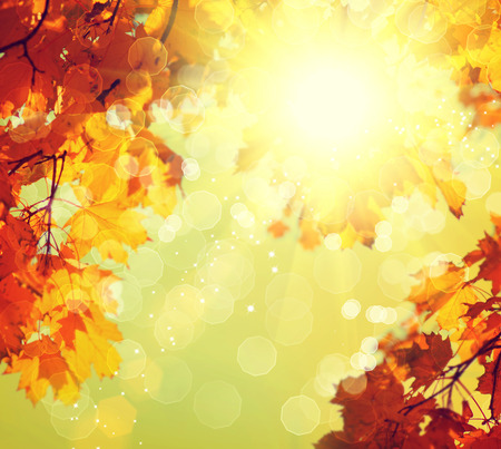 Abstract autumnal background with colorful leaves and sun photo