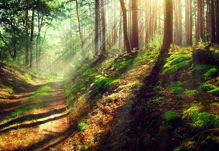 puesta de sol: Escena hermosa del bosque brumoso viejo oto�o