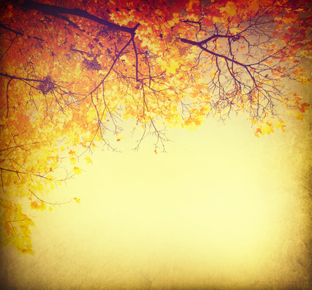 Abstract autumnal background with colorful leaves photo