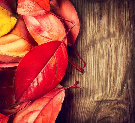hojas de colores: Fondo del oto�o. Hojas de colores sobre un fondo de madera