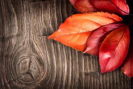 秋天的背景。多彩的葉子上一個木製的背景