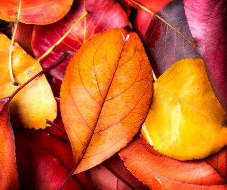 Autumn background. Colorful autumnal leaves photo
