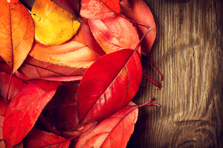 Autumn background. Colorful leaves on a wooden background photo