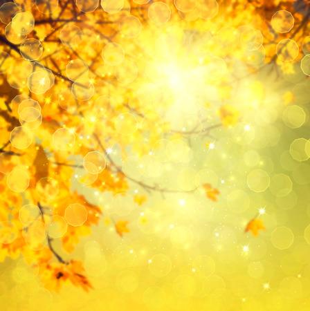 autumn forest: Autunno. Blurred sfondo astratto autunnale Archivio Fotografico