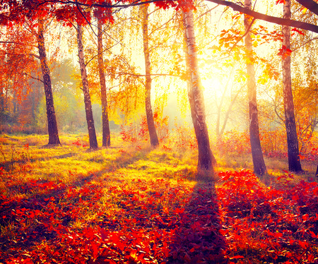 Autumnal Park. Autumn Trees and Leaves in sun rays Stock Photo