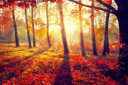 秋。秋。太陽光線の紅葉の木々 写真素材