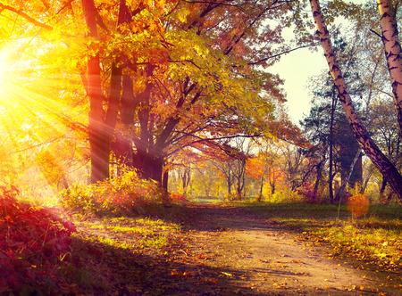 Fall. Autumnal Park. Autumn Trees and Leaves in sun light photo