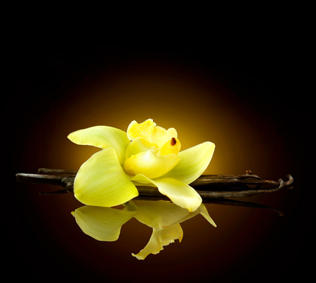 fragranza: Vanilla. Baccelli e fiore di vaniglia isolato su sfondo nero Archivio Fotografico