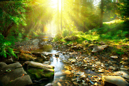 sunbeam: Mountain river. Tranquil scenery in the middle of green forest