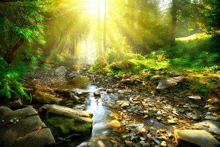 Río de la montaña. Escenografía tranquila en el medio del bosque verde Foto de archivo