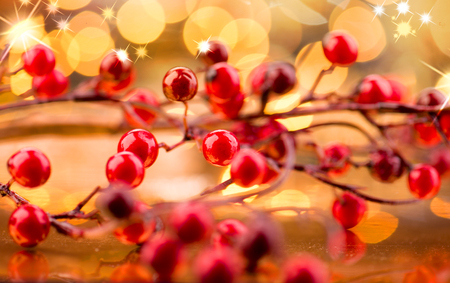 x mass: Christmas berries. New Year decorations over golden background